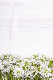 Cadre de fleurs blanches sur le fond en bois blanc Photo libre de droits