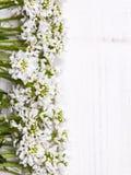 Cadre de fleurs blanches sur le fond en bois blanc Images libres de droits