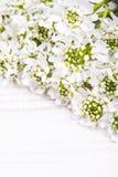 Cadre de fleurs blanches sur le fond en bois blanc Images stock
