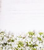 Cadre de fleurs blanches sur le fond en bois blanc Photographie stock libre de droits