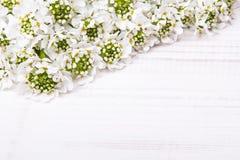 Cadre de fleurs blanches sur le fond en bois blanc Image stock