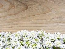 Cadre de fleurs blanches sur le fond en bois brun Photo libre de droits