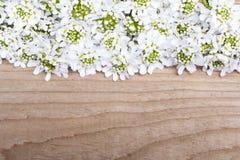 Cadre de fleurs blanches sur le fond en bois brun Images libres de droits