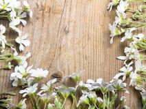 Cadre de fleurs blanches sur le fond en bois brun, Image stock