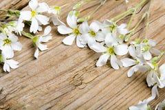 Cadre de fleurs blanches sur le fond en bois brun, Photo libre de droits