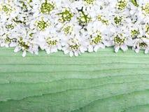 Cadre de fleurs blanches sur le fond en bois vert Photo stock