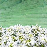 Cadre de fleurs blanches sur le fond en bois vert Photographie stock libre de droits