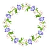 Cadre de fleurs d'anémone d'aquarelle Branches de ressort avec des fleurs et des plumes d'anémone illustration libre de droits