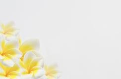 Cadre de flore Photo libre de droits