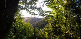 Cadre de forêt photos libres de droits