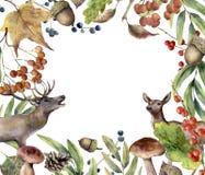 Cadre de forêt d'automne d'aquarelle Cadre floral peint à la main avec des cerfs communs, sorbe, champignons, baies, gland, cône  Photographie stock libre de droits