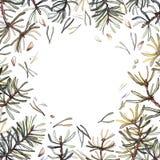 Cadre de forêt de pin, illustration d'aquarelle Le pin s'embranche composition illustration stock