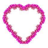 Cadre de forme de coeur fait à partir des fleurs d'orchidée d'isolement sur le blanc Image stock