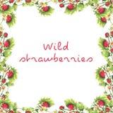 Cadre de fraisier commun illustration de vecteur