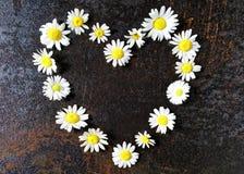 Cadre de guirlande de coeur avec des fleurs de camomille Photo stock