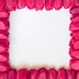 Cadre de jour de valentines ou de mères - photos courantes image libre de droits