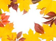 Cadre de lame d'automne Photos libres de droits