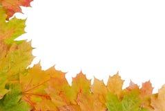 Cadre de lames d'automne photographie stock libre de droits