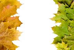 Cadre de lames d'automne photo libre de droits