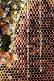 Cadre de nid d'abeilles Photo stock
