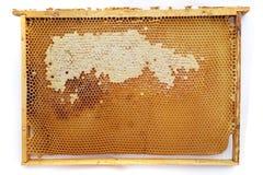 cadre de nid d'abeilles d'isolement Photos stock