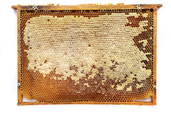 cadre de nid d'abeilles d'isolement Photos libres de droits