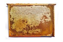cadre de nid d'abeilles d'isolement Photographie stock libre de droits