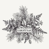 Cadre de Noël avec le pin, le houx et les fougères Photos stock
