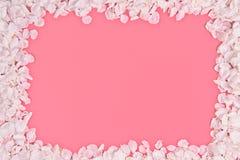 Cadre de pétales de cerise Image stock