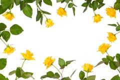 Cadre de papeterie de fleur de Rose Photos libres de droits