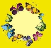 Cadre de papillons Photographie stock libre de droits