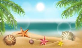 Cadre de plage d'été avec des coquilles, des étoiles de mer et le palmier Photo libre de droits