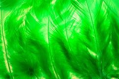 Cadre de plume Photo libre de droits