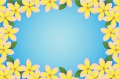 Cadre de Plumeria Images stock