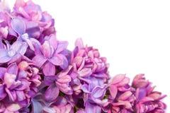 Cadre de ressort avec des fleurs de lilas Photographie stock libre de droits
