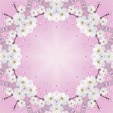 Cadre de ressort de fleur Photographie stock libre de droits