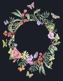 Cadre de rond d'été d'aquarelle avec la camomille, les baies, les Wildflowers, le Blackberry et les papillons illustration de vecteur