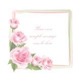 Cadre de Rose de fleur d'isolement sur le fond blanc Décor floral de vecteur Photographie stock