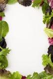 Cadre de salade photographie stock