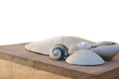 Cadre de Seashell Photo libre de droits