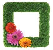 Cadre de tableau d'herbe verte avec des fleurs Images libres de droits