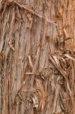Cadre de texture d'arbre d'écorce plein en nature Images libres de droits