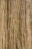 Cadre de texture d'arbre d'écorce plein en nature Photographie stock