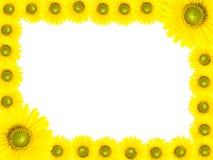 Cadre de tournesol Photographie stock