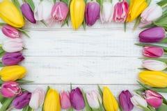 Cadre de tulipes Photos stock