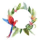 Cadre de vecteur d'aquarelle avec le perroquet rouge, les feuilles tropicales et les fleurs d'isolement sur le fond blanc Photographie stock libre de droits