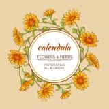 Cadre de vecteur de Calendula Images libres de droits