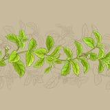 Cadre de vecteur de Stevia Images libres de droits