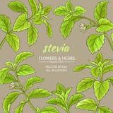 Cadre de vecteur de Stevia Photos stock