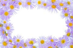 Cadre des camomiles violets Image libre de droits
